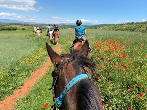 スペイン乗馬ツアーの様子