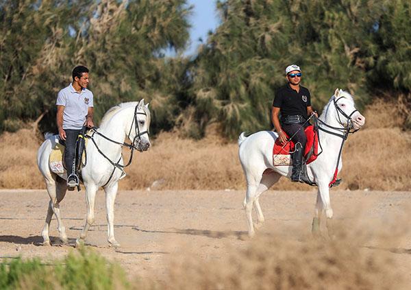 エジプト乗馬