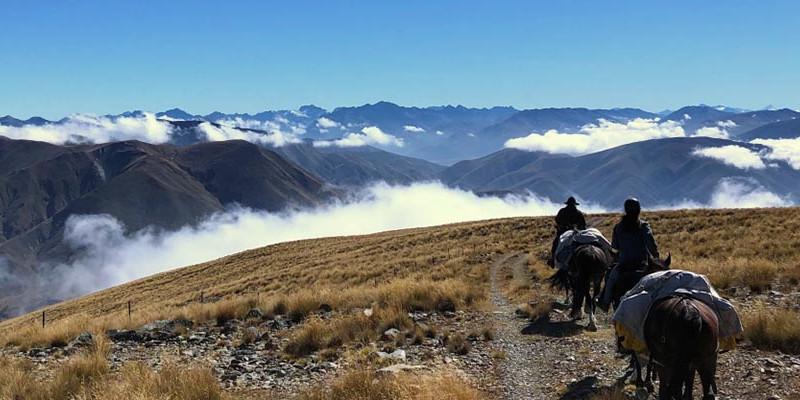 ニュージーランド乗馬